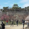 大阪城公園の梅林2020 見頃と開花状況を写真と動画で紹介!