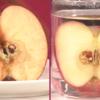 MEC食の弱点。ビタミンCを摂取しないと寿命が縮まる。便秘の原因かもしれない。