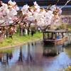 【京都桜母娘旅*2】穴場見っけ!宇治川派流の桜並木と十石舟【長建寺】