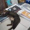 台湾の猫だらけの村「猴硐(ホウトン)」へ行った