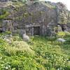 珊瑚石のお墓
