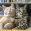 #鎌倉猫見亭 の保護猫を家族として迎えた話