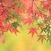 黄梅院の紅葉2018。秋の特別公開。