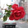 #FlowersForMrOnaga and #FlowersForMyFriend