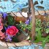 晩秋の庭から摘んだハーブ&花でモイストポプリ作り