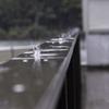 雰囲気撮影に挑戦 ~雨の柏の葉公園~