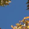 秋の日つれづれ〜♪