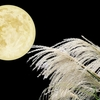 お月見を英語で説明できる? 使えるオススメ英語フレーズ20選