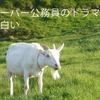 日曜9時ドラマ「ナポレオンの村」が面白い!