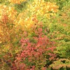 飛騨の秋景色 【肴の駐車場にも紅葉が!】