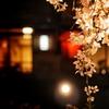 福岡で夜桜をみる