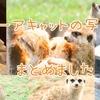 【写真】小さな警備員、ミーアキャットの写真まとめ【動物園】