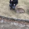 奈良公園のシカがただただ可愛いってだけのブログ
