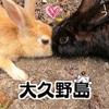 【大久野島】もふもふウサギ天国★ちょっとドローン【うさぎ島】