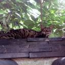 「瓦は日本猫の知恵」ぬっこくんの日常(12)