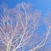 【ホワイトワールド尾瀬岩鞍】広いバーンで初級から上級まで楽しめるスキー場