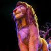 ライオンキングを再前席で!「Festival of the Lion King Signature Dining Package」の簡単解説!【アニマルキングダム】
