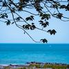 美しい海を一望:護国寺