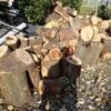 穴が開いた木 薪割り小屋の奥に Wood with holes
