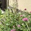 夏花壇の反省と9月の駐車場花壇の様子