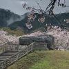 雨でも美しい 桜が彩る石舞台古墳・飛鳥寺・橘寺