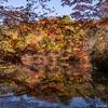 神戸市立森林植物園へ紅葉狩り