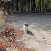 ネコさんが堂々と「紅葉の茶屋」を行く。