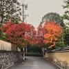 京都出張 -出張先朝ランで東福寺の紅葉を独り占め