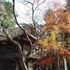 眺望全景「金鳳山平林禅寺」紅葉散策