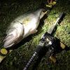 春の淀川でモンスター狙い釣行のおはなし。