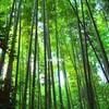 【嵯峨野】青々とした竹林の絶景を堪能してきた