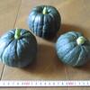 かぼちゃを収穫