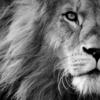 【青い目のヤングライオン】ジェイ・ホワイトという野毛道場が生んだ最高傑作