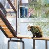 東山動物園のかわいいレッサーパンダをちらりと見てきた
