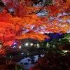 由志園のライトアップとイルミネーション⑤:島根県松江市