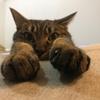 【猫】ハマグリの胴長コレクション 2019 S/S