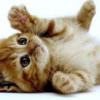 ある意味・・驚異の大発見!猫アレルギーにならない方法!?