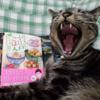 「作ってあげたい小江戸ごはん」と猫さん写真4枚(チャイてまりコポロ @chaiKOPOROtema さん)