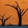 ナミビア でレンタカー旅行 その11 ~早朝のデットフレイ~