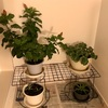 植物の冬越し準備完了!〜400円で棚を作ってみました〜