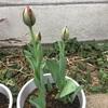 開花はまだかな😄