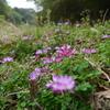 春の野に咲く花