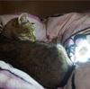 ネコ型! 魔法の自撮りライトほしさに久々にCanCamを買ったのだw