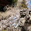 六地蔵寺の桜
