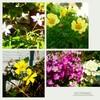 アン美容室の花🌷