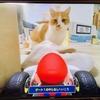今回のマリオカートのコースは、愛猫が登場?!