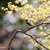 梅雨の合間に出会った鳥さんとセキレイさん