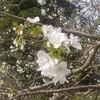 早めの花見🌸神社&ウォーキング、そして能面完成