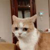 雨田甘夏、潔癖です。【猫と虫さんとおトイレ事情】