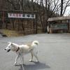 裂石温泉「雲峰荘」で犬散歩 13-14APR'2018